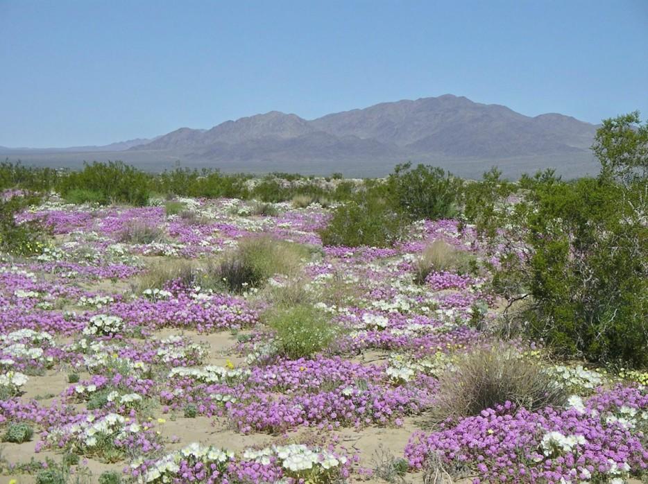 22 - Flowering desert