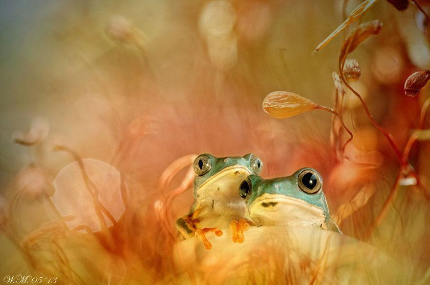 macro-frogs-wil-mijer-13