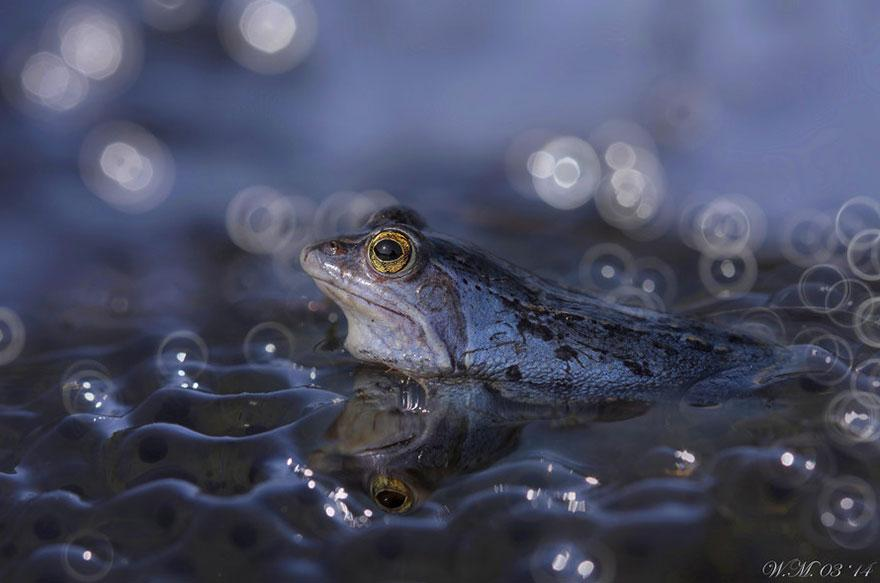 macro-frogs-wil-mijer-18