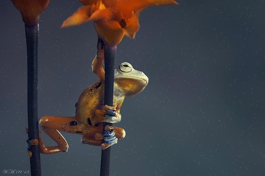 macro-frogs-wil-mijer-1