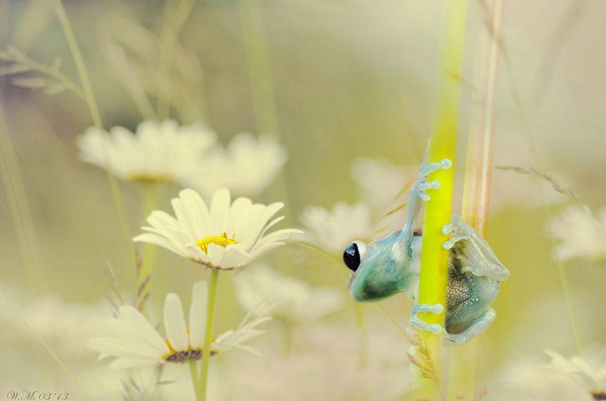 macro-frogs-wil-mijer-9